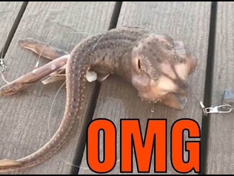 ¿«Qué demonios es» la extraña criatura capturada en Coney Island (Nueva York)?