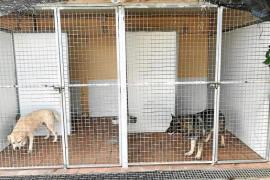 La Policía Local de Palma responde ante la polémica de los perros de la Unidad Canina