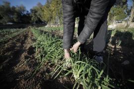 Los agricultores de Baleares apoyan las protestas del sector pero descartan movilizaciones
