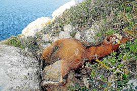 Matanza de cabras en Es Vedrà