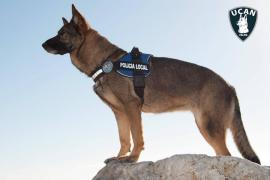 Cort recula y descarta dar en adopción a los tres perros de la Policía Local de Palma