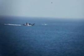 Una ONG difunde un vídeo de una «persecución» de delfines