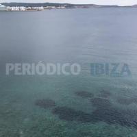 Un delfín se 'salta' el estado alarma y se deja ver por la Bahía de Sant Antoni