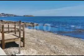 Video de la montaña de posidonia en Platja d'en Bossa.
