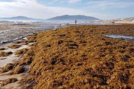 Alga invasora en el Mediterráneo