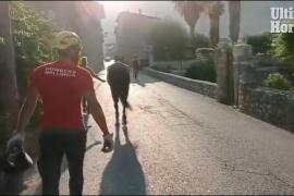 Rescate de un caballo en Mallorca