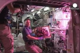 Primera lechuga espacial