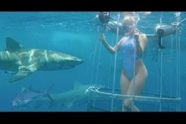 Ataque de un tiburón