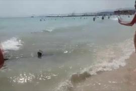 Avistamiento de un tiburón en Can Pastilla