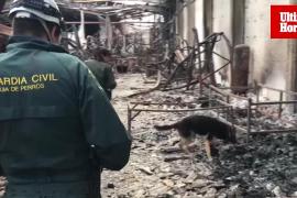 Perro especialista en incendios