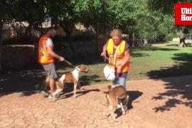 Desfile de perros adultos en Son Reus