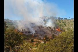 Alarma en Andratx por un incendio forestal